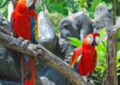 Visit Bird Pard