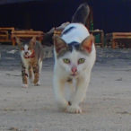 Cats of Gili